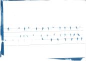 cyano_bird